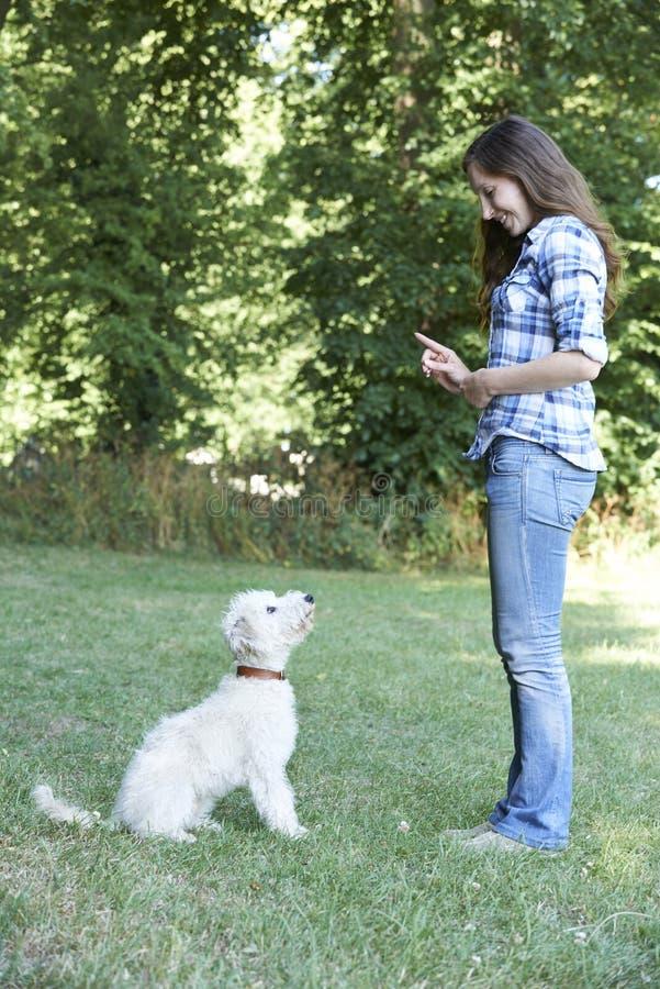 Hundebesitzer-unterrichtender Haustier Lurcher zu sitzen lizenzfreie stockfotos