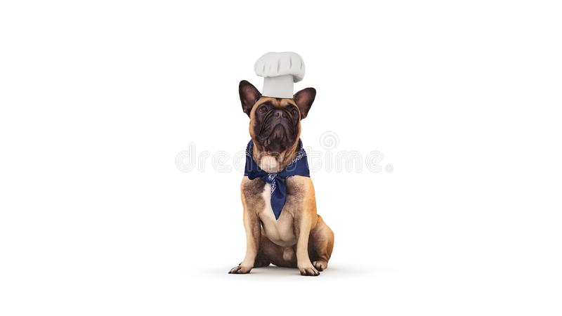Hundechefkoch Wiedergabe 3d lizenzfreie abbildung