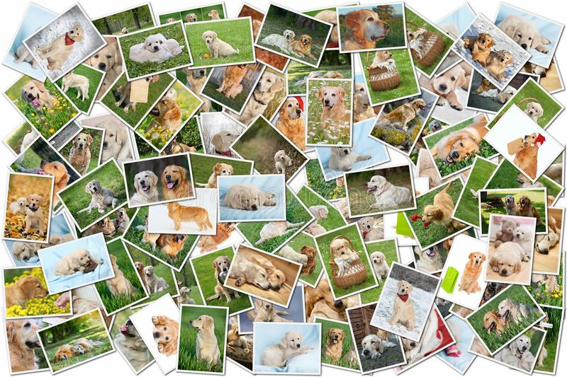 Hundecollage - 101 Stücke stockfotos
