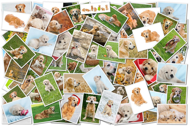 Hundecollage stockbilder