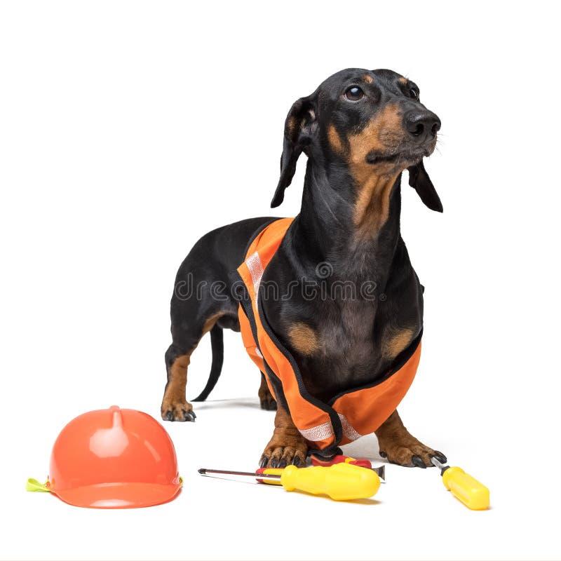 Hundeerbauerdachshund in einem orange Bausturzhelm mit verschiedenen Bauwerkzeugen Schraubenzieher, Zangen, lokalisiert auf weiße lizenzfreie stockbilder