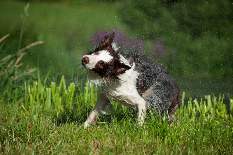 Hundeerschütterungen lizenzfreie stockfotografie