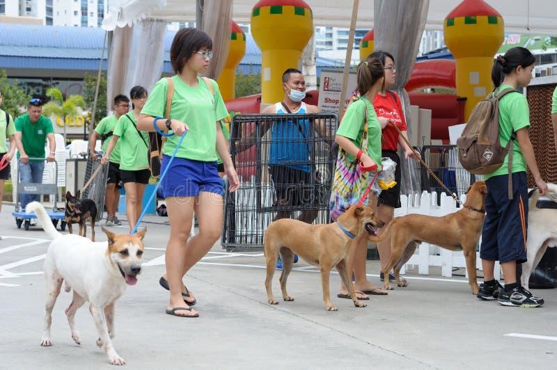 Hundeführer und geschützte Hunde lizenzfreie stockfotografie