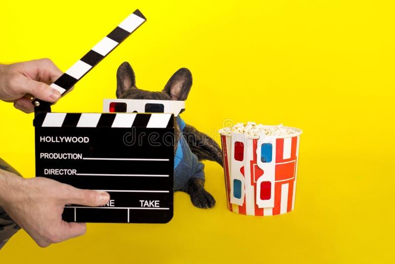 Hundefranz?sische Bulldogge in den Gl?sern 3D schaut aus den Crackern des Direktors heraus popcorn stockfotos