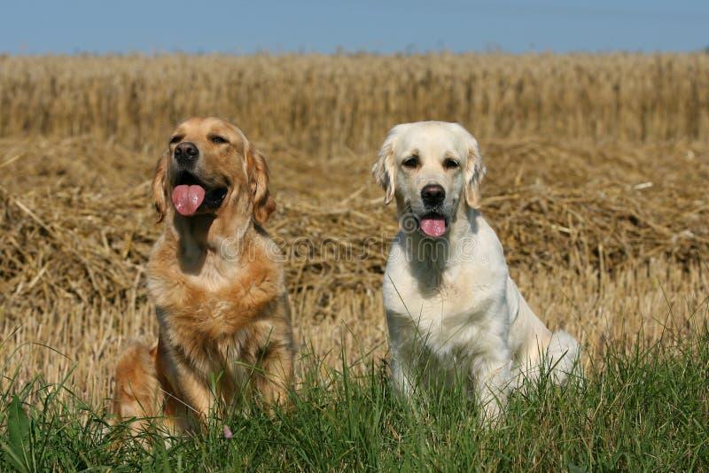 Hundefreunde lizenzfreie stockbilder
