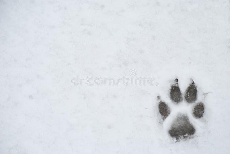 Hundefußdruck in einem Schnee stockfoto