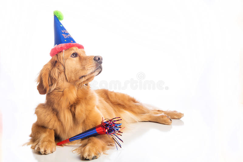 Hundegeburtstagsfeier lizenzfreie stockbilder