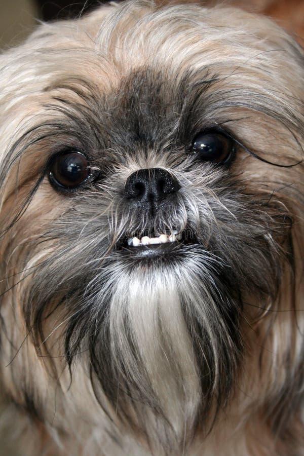 Hundegesicht lizenzfreie stockfotos