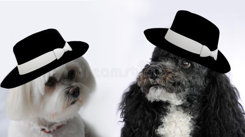 Hundehochzeit stockfoto