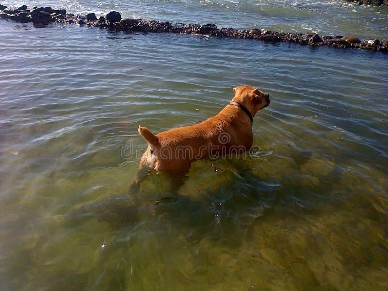 Hundekind stockfoto
