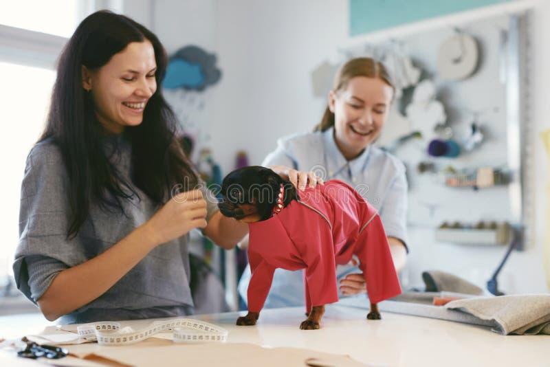 Hundekleidung Weibliches Schneider-Wearing Suit On-Haustier stockfotografie