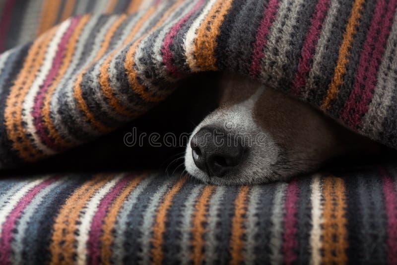 Hundekranke oder -c$schlafen lizenzfreie stockfotografie
