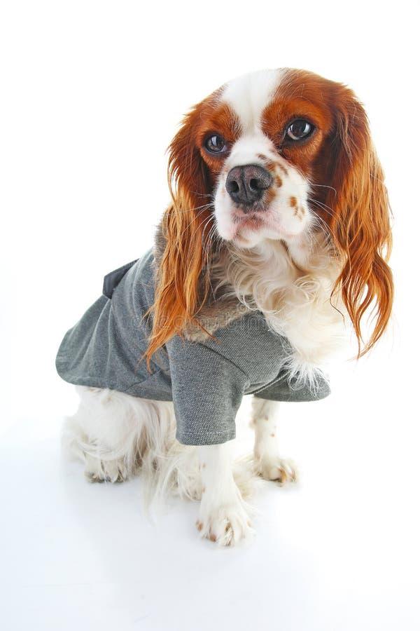 Hundemantel Tragender Wintermantel des Welpen Hundemantel-Jacken-Haustier liefert Kleidungs-Winter-Kleider-Kleidungs-Welpen-Kostü stockbilder
