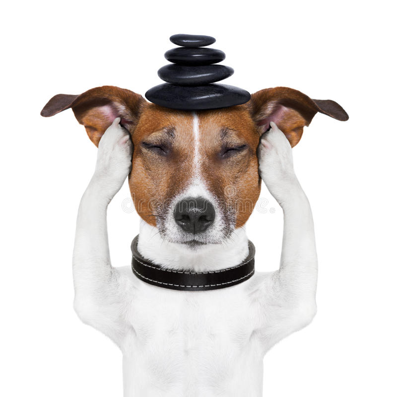 Hundemeditation stockbilder