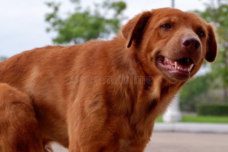 Hunden är gulliga husdjur royaltyfri bild