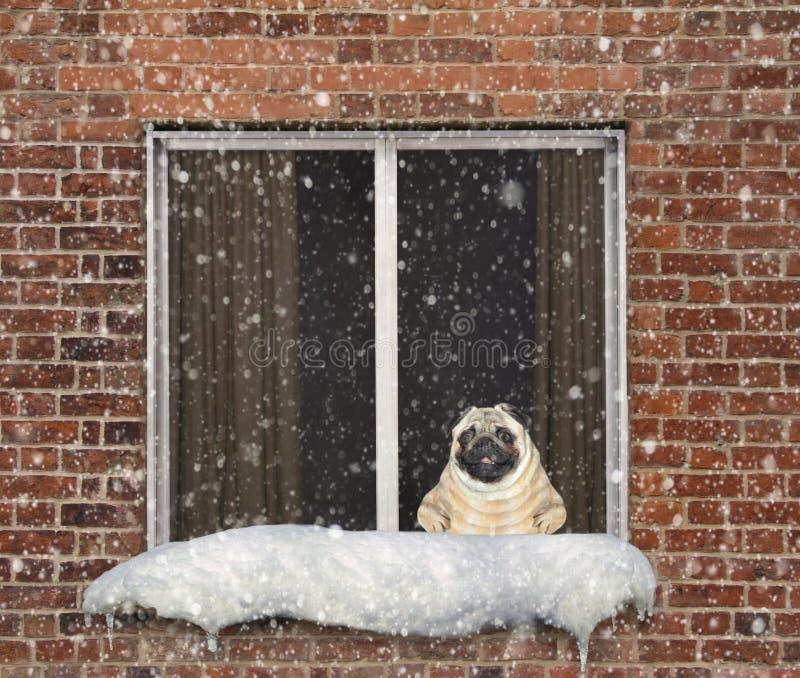 Hunden är på en fönsterfönsterbräda arkivfoton