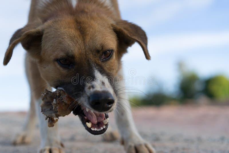 Hunden äter höna arkivbild