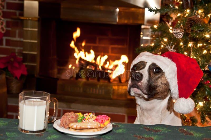Hunden äter Santas kakor. royaltyfri fotografi