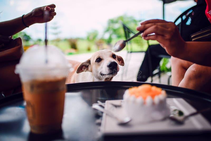 Hunden önskar att äta kakan arkivfoto