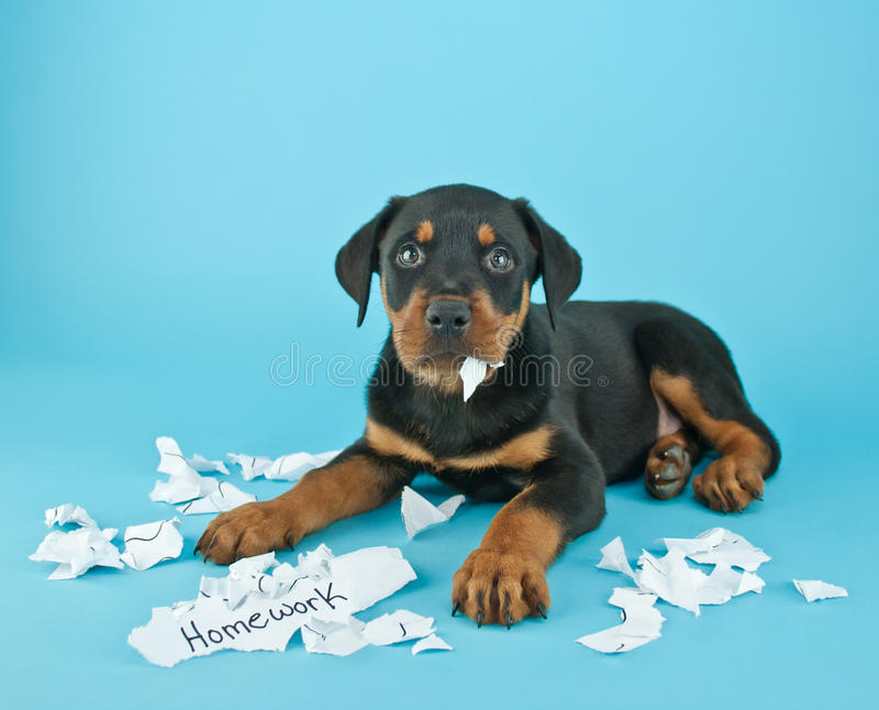 Hunden Ate My Homework!!! arkivfoto