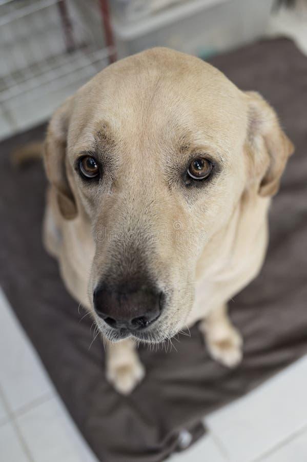 hunden eyes s arkivfoton