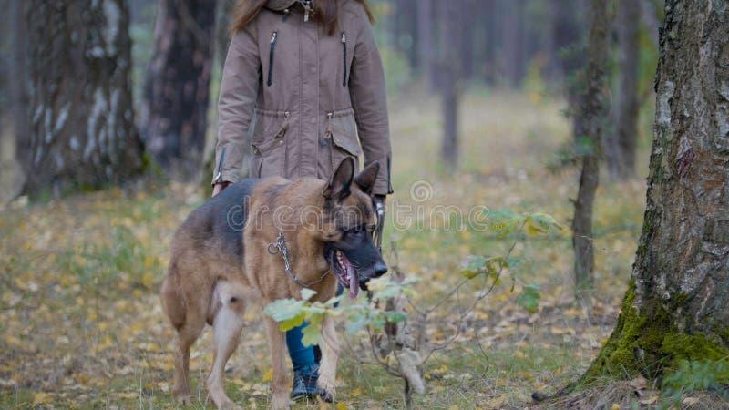 Hunden går med mistersna i träna royaltyfri foto