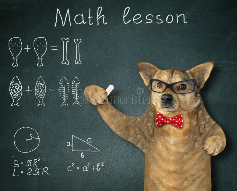 Hunden ger en matematikkurs royaltyfria foton