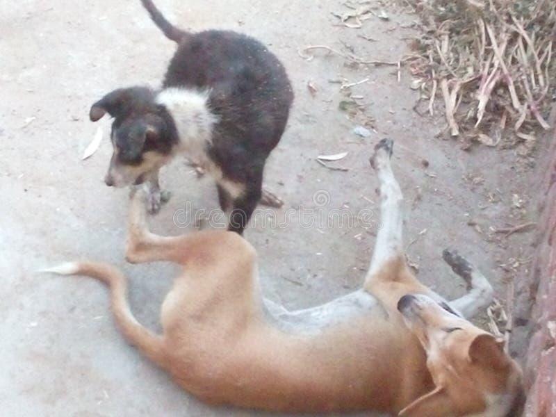 Hunden grälar royaltyfria bilder
