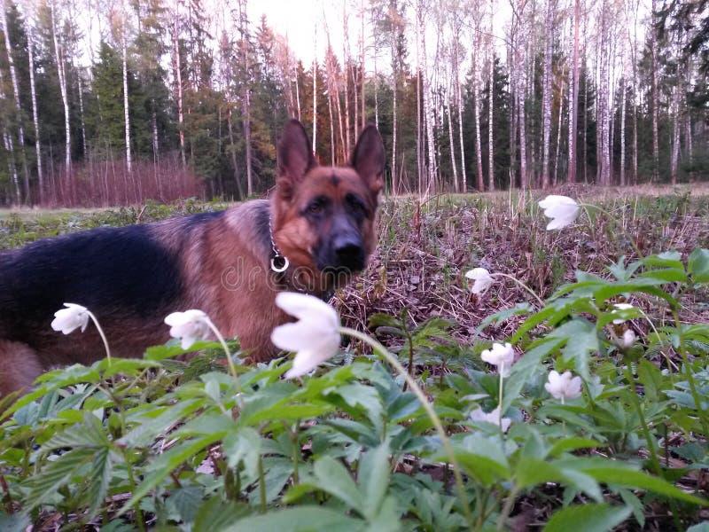 Hunden i blommorna royaltyfri fotografi
