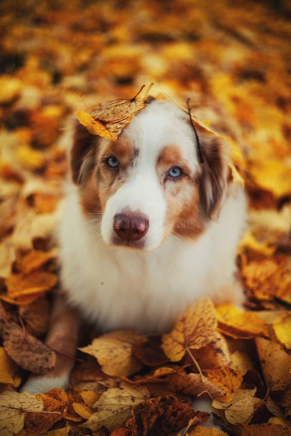Hunden i höst parkerar royaltyfri fotografi