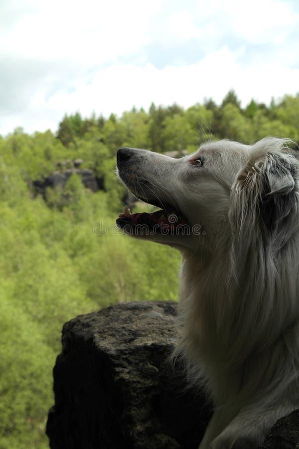Hunden i vaggar arkivfoton