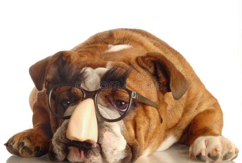hunden klädde grinigheten like marx arkivfoto