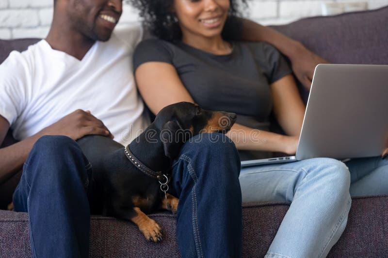 Hunden lägger ner på svarta familjknä som ser bärbara datorn royaltyfri bild