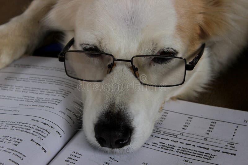 Hunden l?ser en bok royaltyfri bild