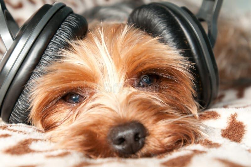 hunden lyssnar musik till arkivfoto