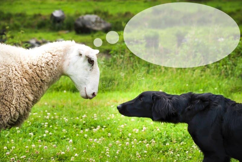 Hunden möter får, anförandeballongen, kopieringsutrymme arkivfoto