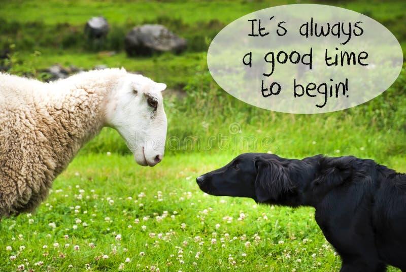 Hunden möter får, citerar alltid en bra Time för att börja arkivfoto