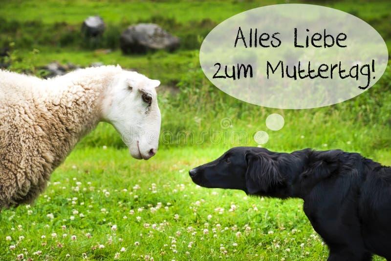 Hunden möter får, dag för mödrar för Alles Liebe Zum Muttertag hjälpmedel lycklig arkivfoto