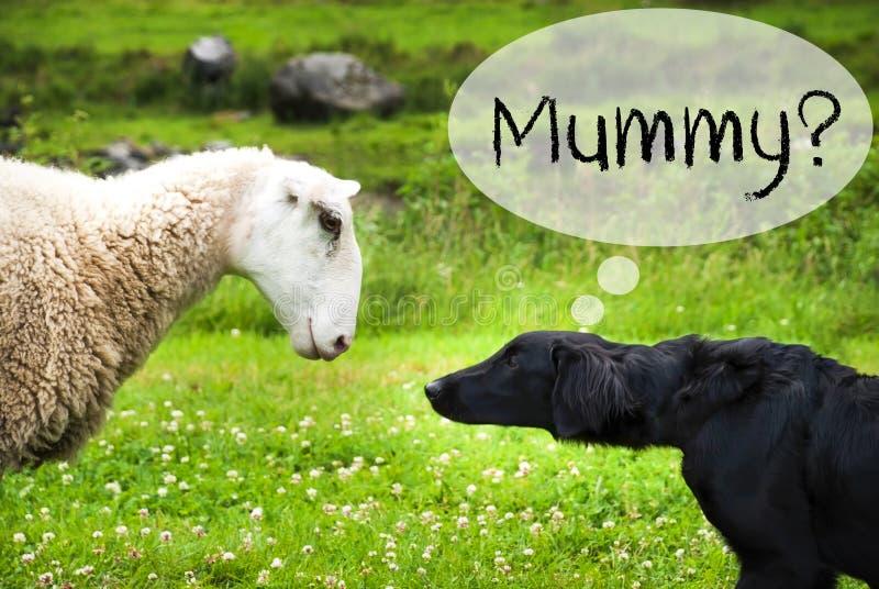 Hunden möter får i Norge, textmamma royaltyfria foton