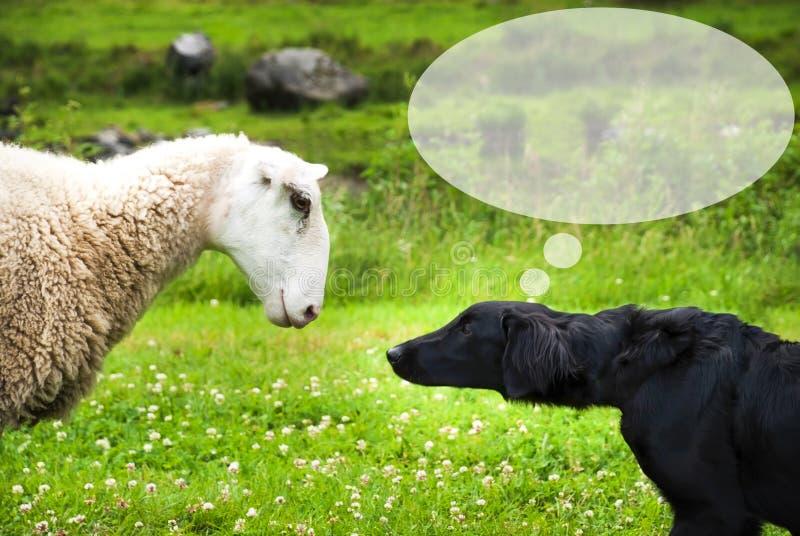 Hunden möter får, kopieringsutrymme, anförandeballong arkivbild
