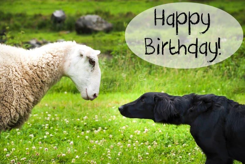 Hunden möter får, lycklig födelsedag för text arkivbild