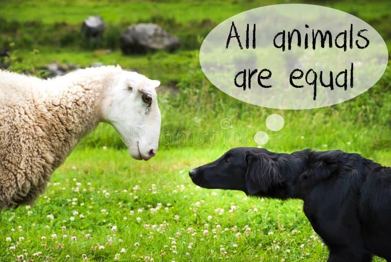 Hunden möter får, smsar alla djur är jämbördig arkivfoton