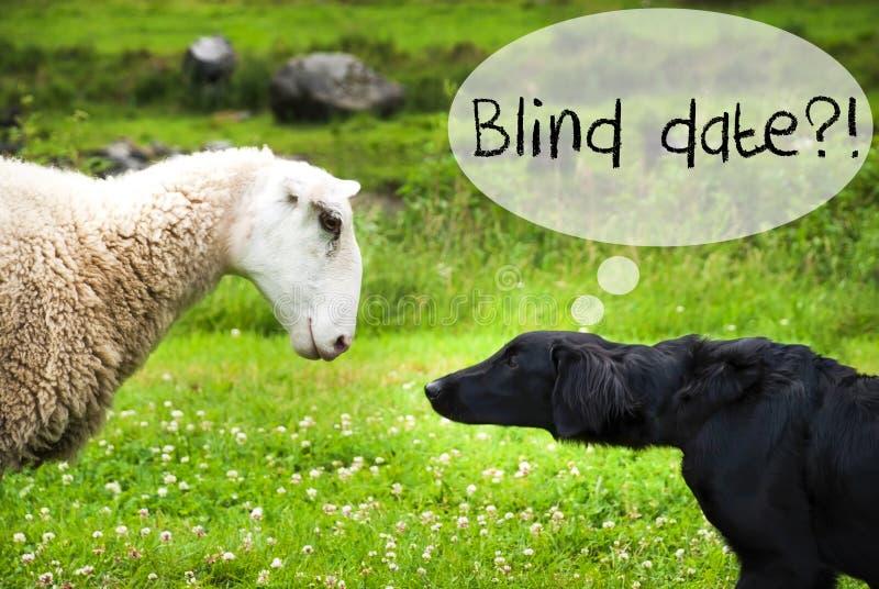 Hunden möter får, textblindträff royaltyfria bilder