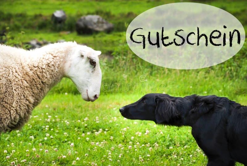 Hunden möter får, tysk kupong för ordGutschein hjälpmedel royaltyfri bild