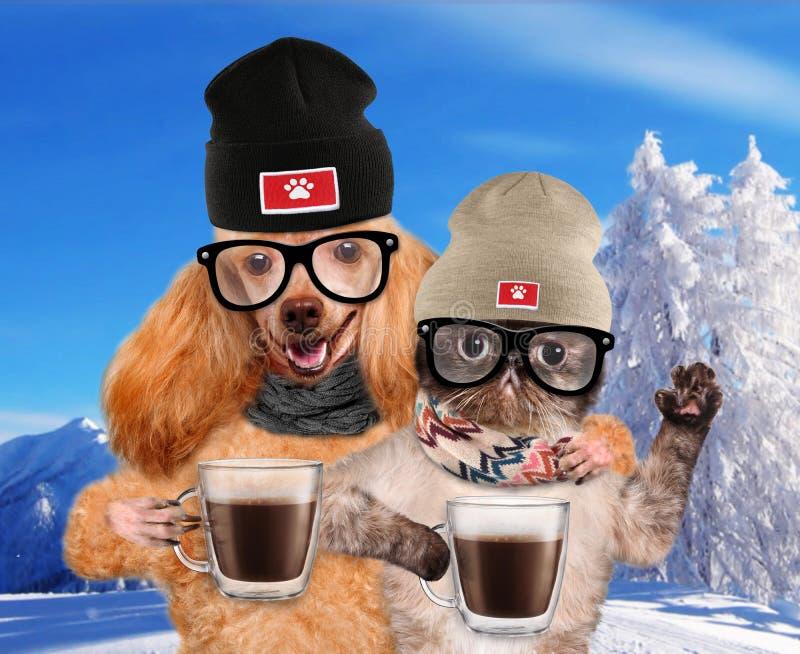 Hunden med en katt som rymmer i, tafsar av en kopp av kakao royaltyfri fotografi