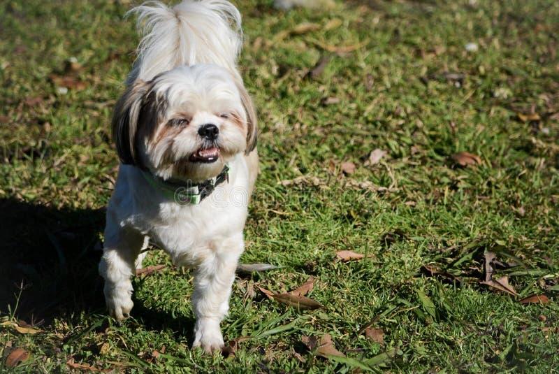 Hunden med morgonljus royaltyfria bilder