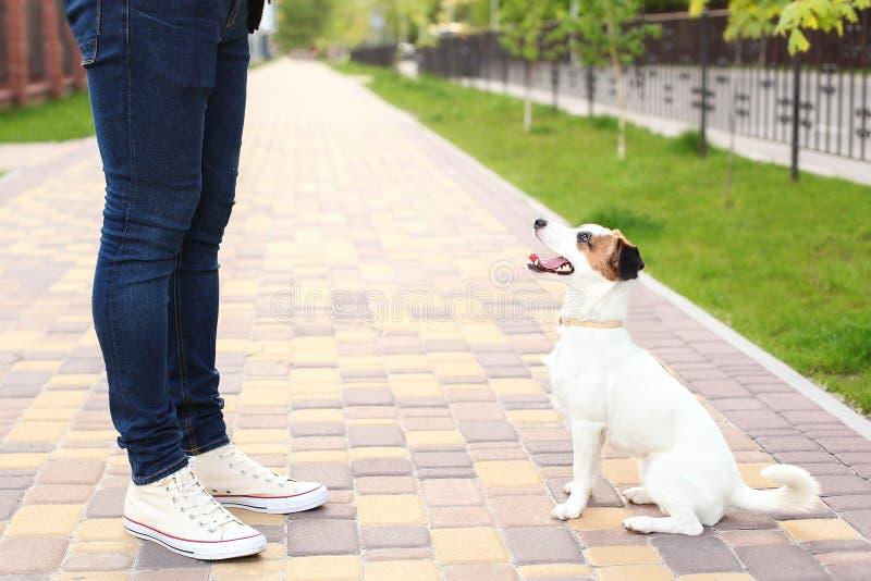 Hunden och ägaren Jack Russell Terrier i förväntan av går i parkerar, på gatan, patienten och lydigt Utbildning och drev royaltyfria bilder