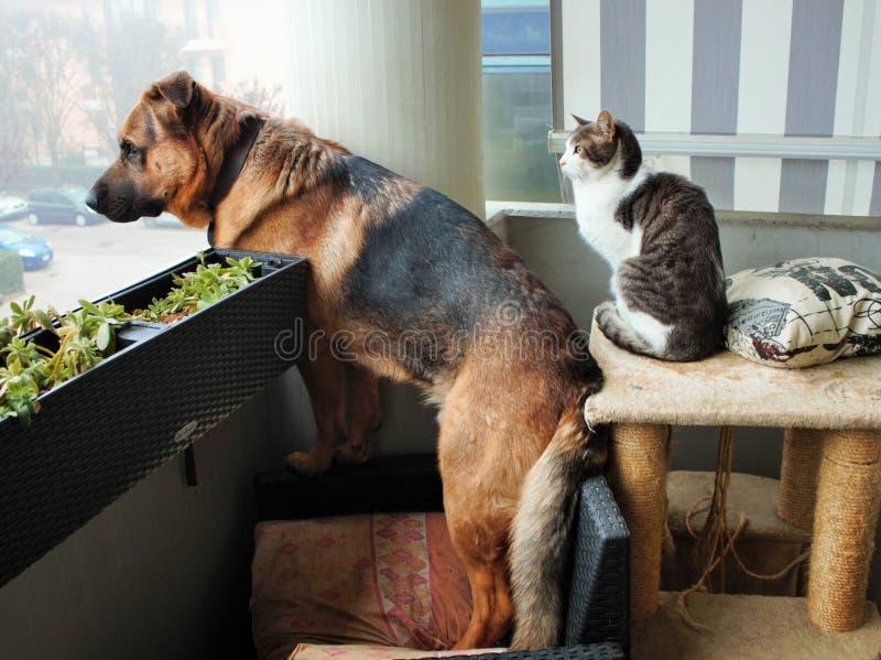 hunden och katten som är försiktiga att observera något, som sade dem, är fiender? royaltyfri fotografi