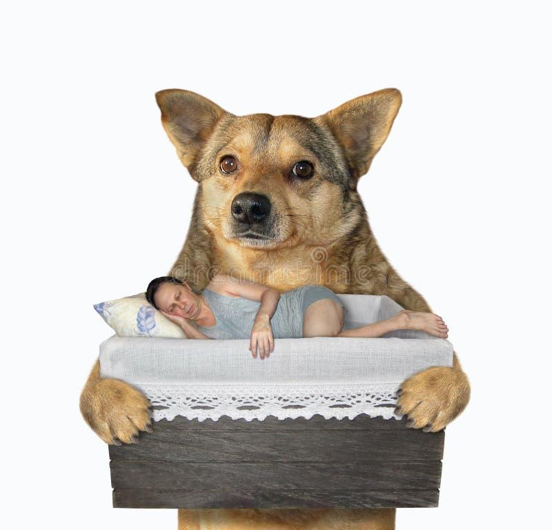 Hunden rymmer en sova man royaltyfri bild