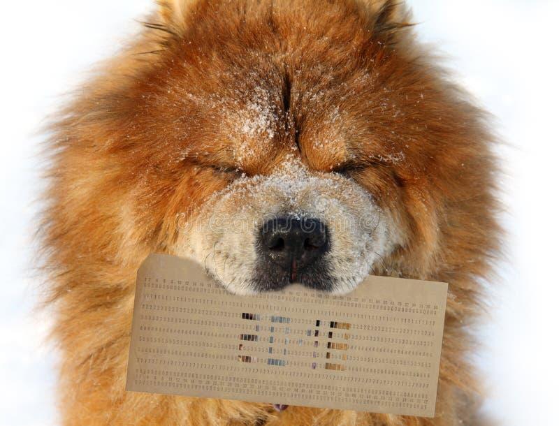 Hunden rymmer i en mun ett stansat kort med diagramet 2018 royaltyfria bilder